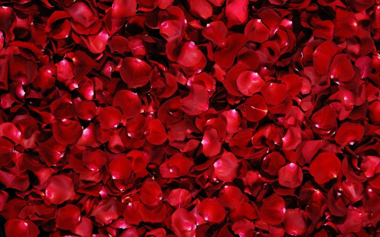 Beautiful Red Roses Hd Wallpaper Download Wallpapers Hd Mother