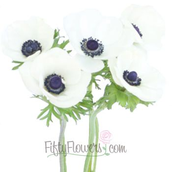 Anemone White Bunch Black Centers 189 99 For 80 Stems Flowers Freesia Flowers Petals