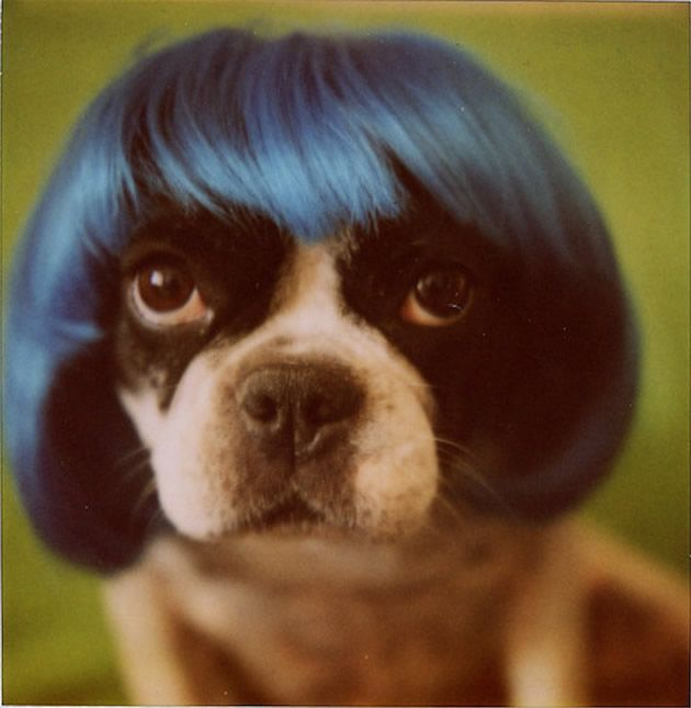Se avessi i capelli li porterei così.