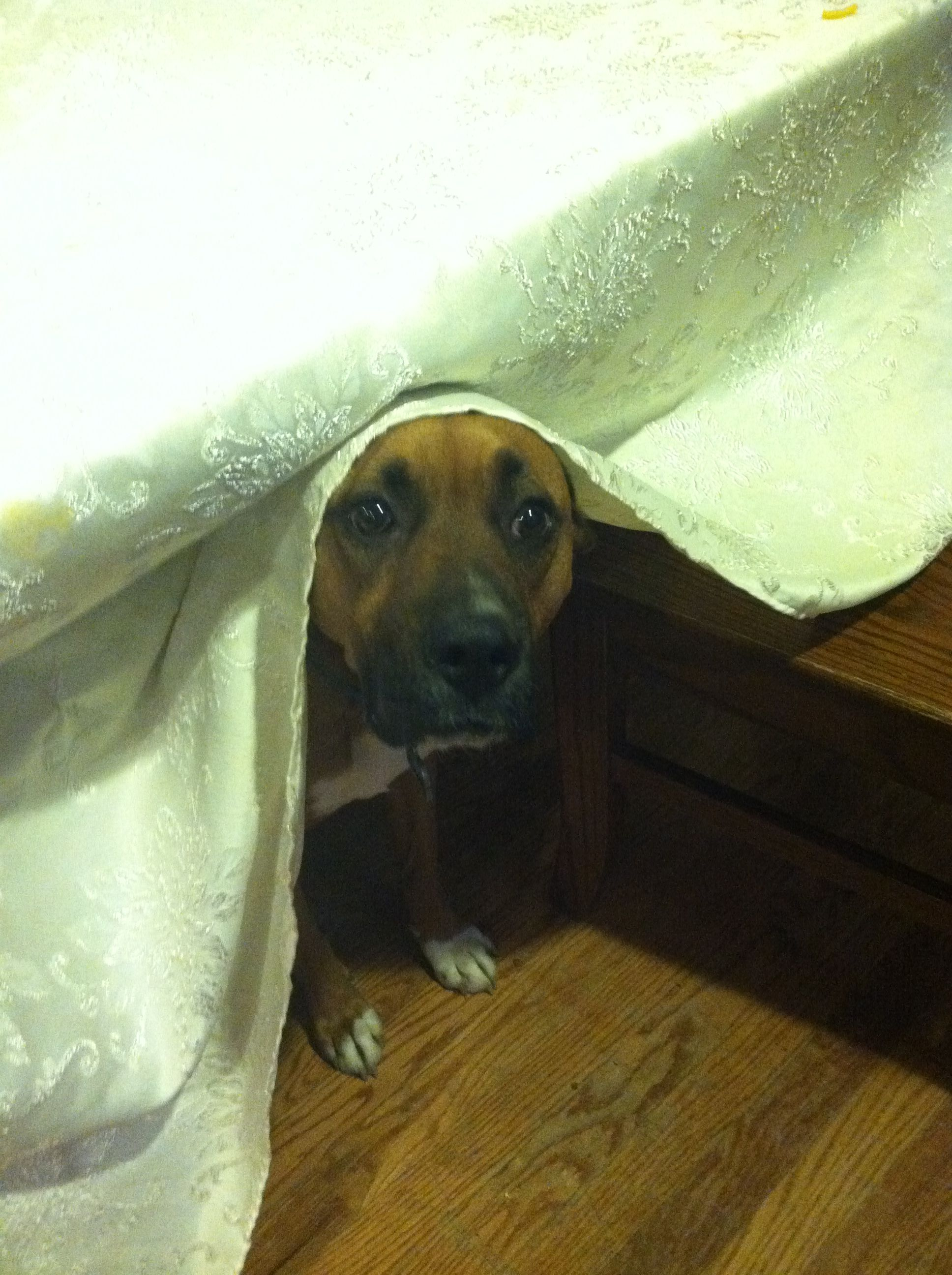 Knowing he ate a loaf of bread and then hiding. If hide too!