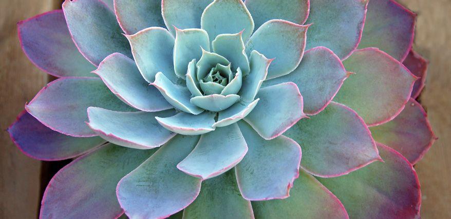 Sukkulenten: Pflegen, Züchten, Deko | Sukkulenten | Pinterest | Deko Sukkulenten Arten Namen Arrangement