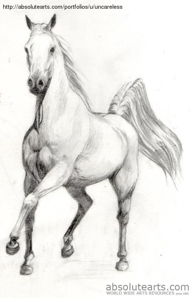 Scetchings free beautiful horses bing images