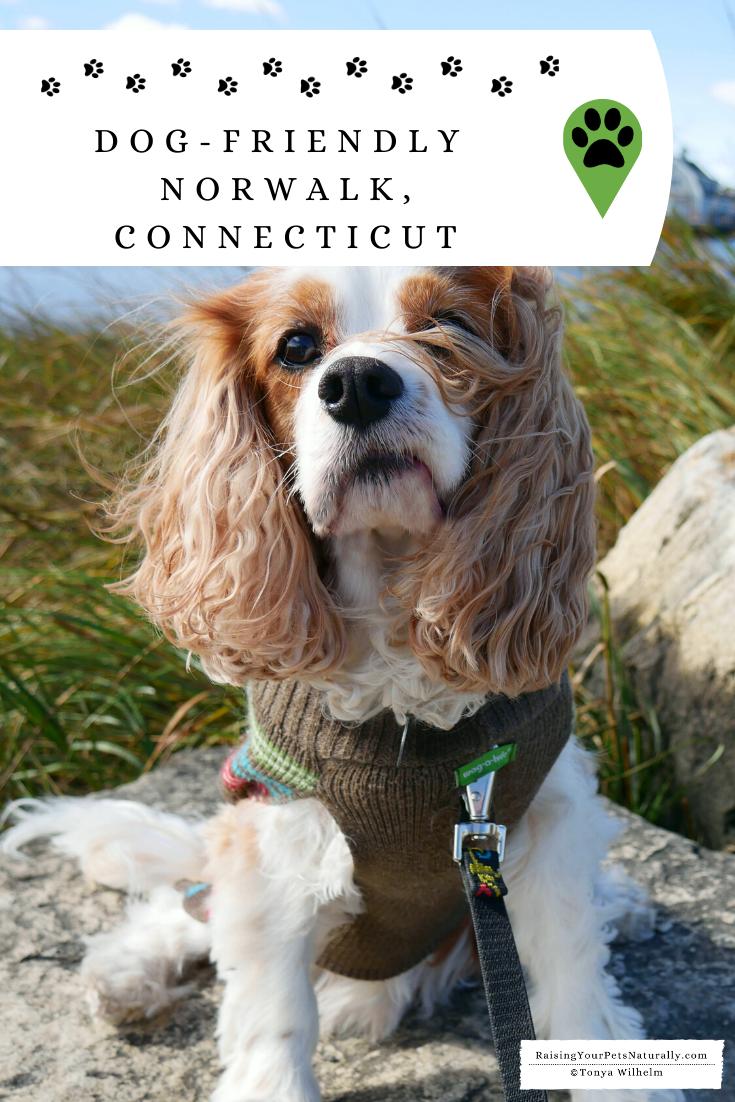 Dog Friendly Norwalk Connecticut And Surrounding Area Dog Friends Pet Travel Pet Friendly Hotels