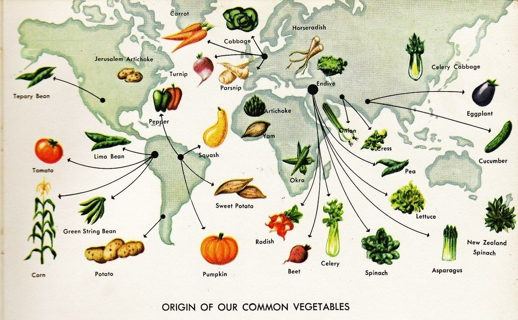 The History About Each Vegetable History, Columbian