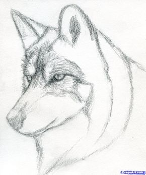 How To Draw A Wolf Head Mexican Wolf Step 4 Wolf Sketch Wolf Drawing Pencil Drawings Easy
