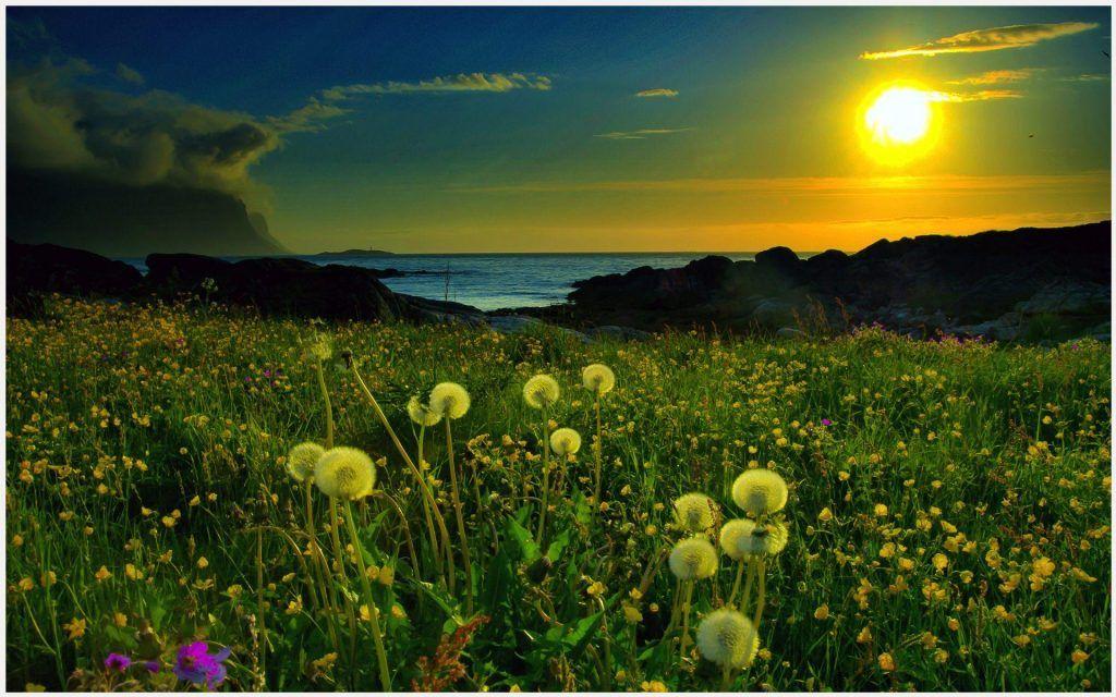 Green Beach Sunrise Wallpaper
