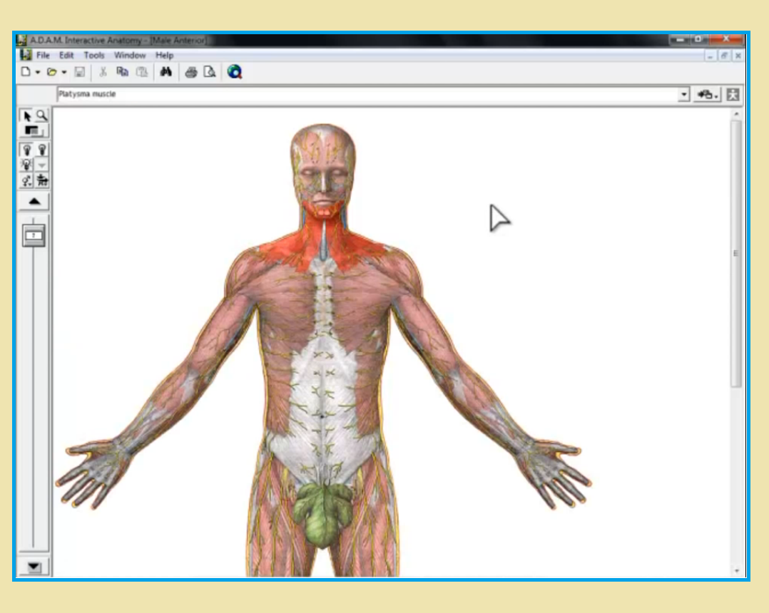Complete Anatomy Crack 3.2.0 Serial Key Mac | Pinterest | Software
