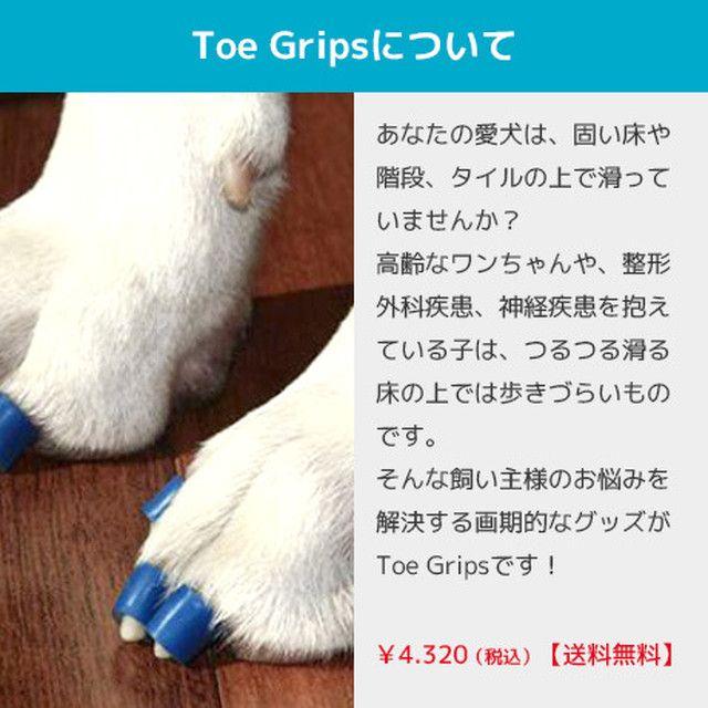 Toe Grips くすの木動物病院 Powered By Base 動物 青 色 病院
