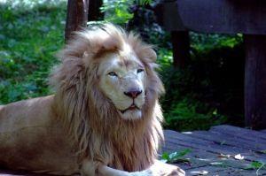 Shomer Yisrael « Article « Teachings | King of Kings Community Jerusalem