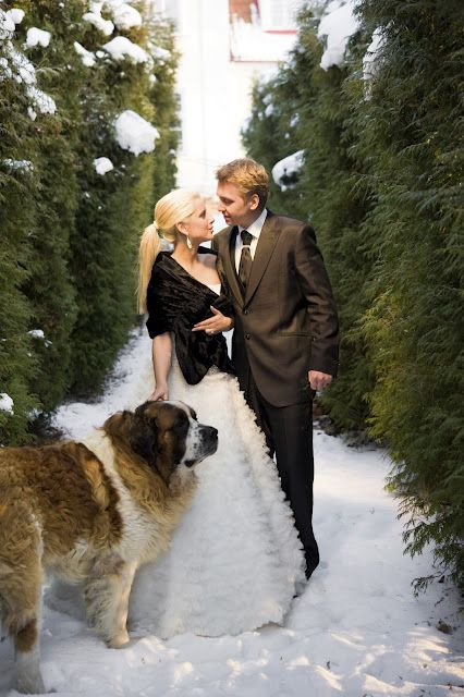 Resultado de imagen para собака saint  bernard свадьба