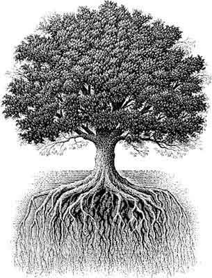 The Oak Tree S Roots Mirror Its Branches And Stretch As Far Below Ground Do Above
