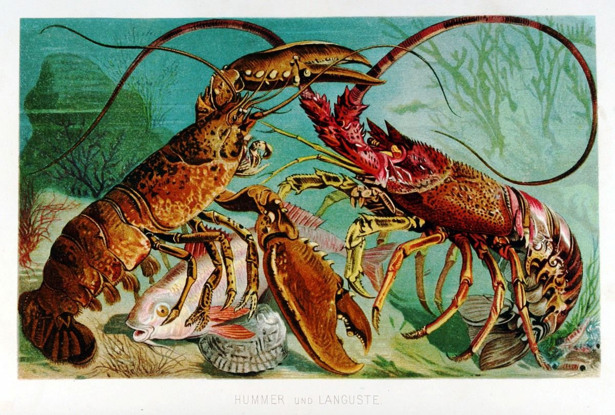 Image result for lobsters in the ocean