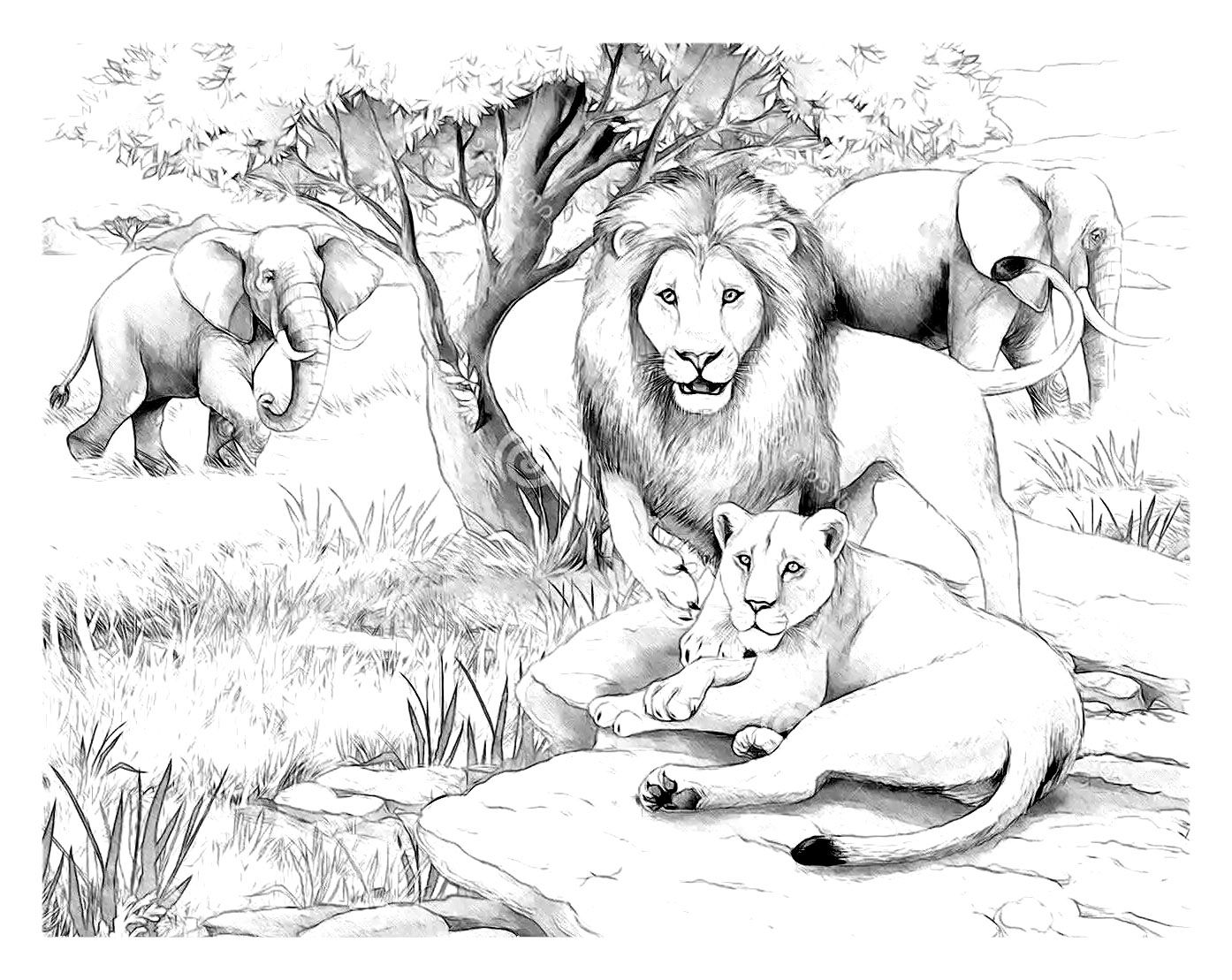Free coloring page lion - Free Coloring Page Coloring Adult Africa Lions Lions Family With Elephants