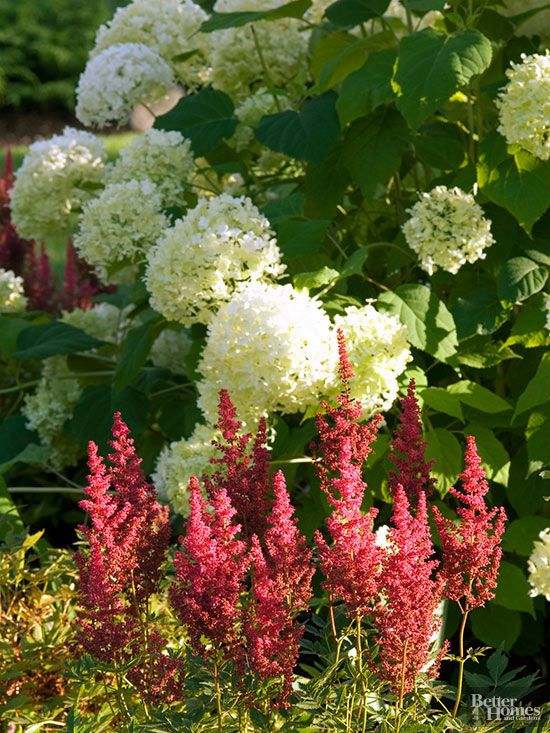 Perennial plant combinations perennials flowering shrubs and mix perennials with shrubs flowering shrubs make ideal partners for your favorite perennials besides their colorful flowers shrubs add architectural mightylinksfo