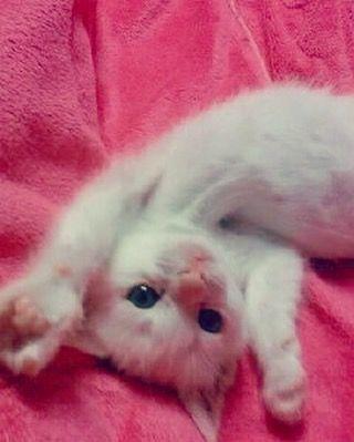 #도도 #아깽이 때 사진 발견 #이게누구야 #넘나귀여운것 #아가아가해 #고양이 #냥이 #냥스타그램 #캣스타그램 #cat #catstagram #catsofinstagram #pet #petstagram #instacat #ilovemycat #catlover #kitty #meow by zz22nn