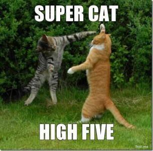 High Five Cats Grappige Katten Grappige Dierenplaatjes Katten