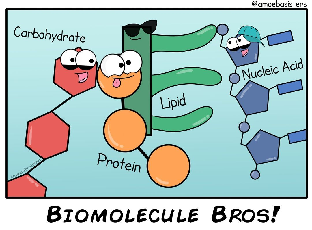 Biomolecules Different Molecules But All Important For