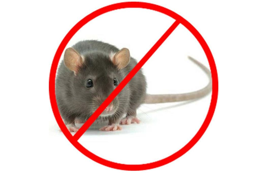 Guide To Use The Best Mice Exterminator