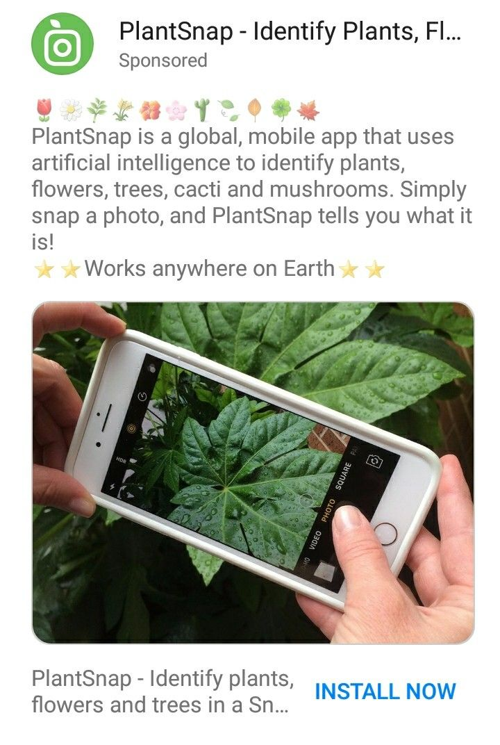 Mobile app to identify plants, PlantSnap Identify plant