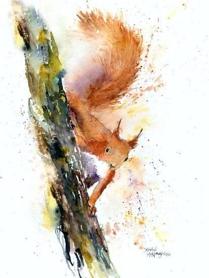 'Squirrel 1' Print – Rachel McNaughton | AllPosters.com