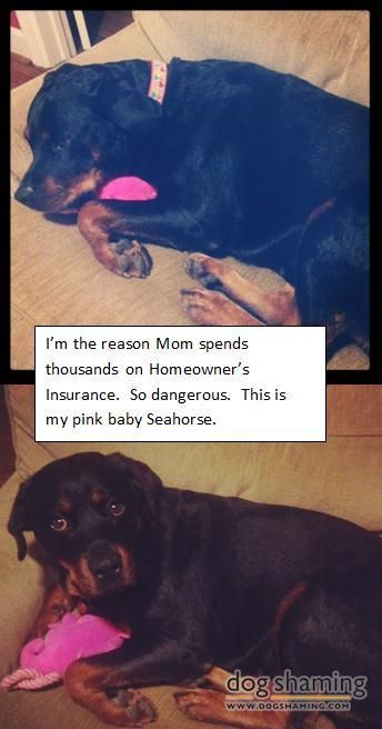 The Best Dog Shaming Pictures Of All Time Dog Shaming Funny Dog