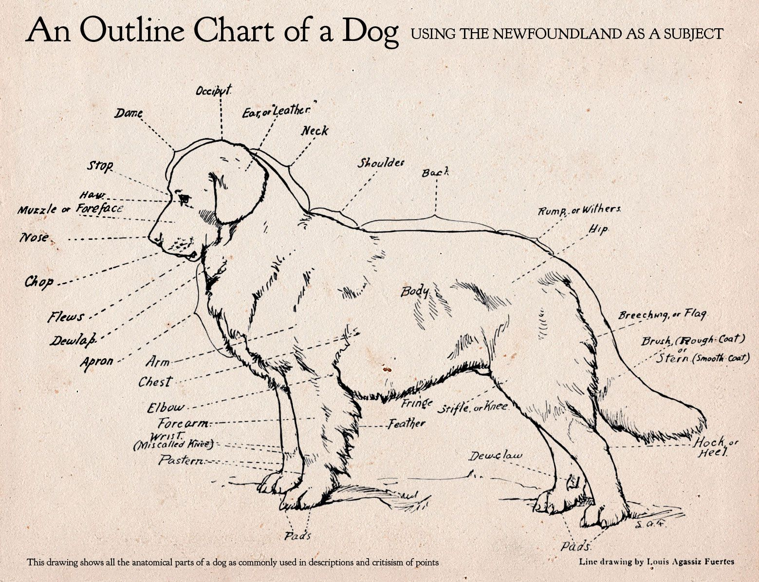 here s an awesome dog anatomy diagram  [ 1559 x 1194 Pixel ]