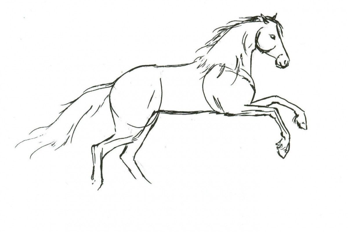 17 Best Images About Horse Drawings On Pinterest Drawings Of How To Draw  Thanksgiving How To