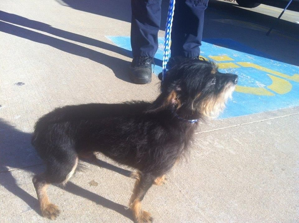 Saving Animals from Euthanasi in Texas.    REEVES 31034-1 TERRIER MIX 3-4 years.              Please  ADOPT ME.               SMITH COUNTY,TYLER,TEXAS.                    PLEASE!PLEASE HELP
