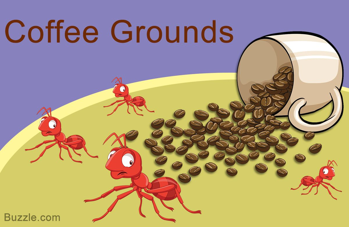 14 Safe And Amazingly Simple Home Remedies To Get Rid Of Ants Home Quicks In 2020 Get Rid Of Ants Rid Of Ants Ants In House