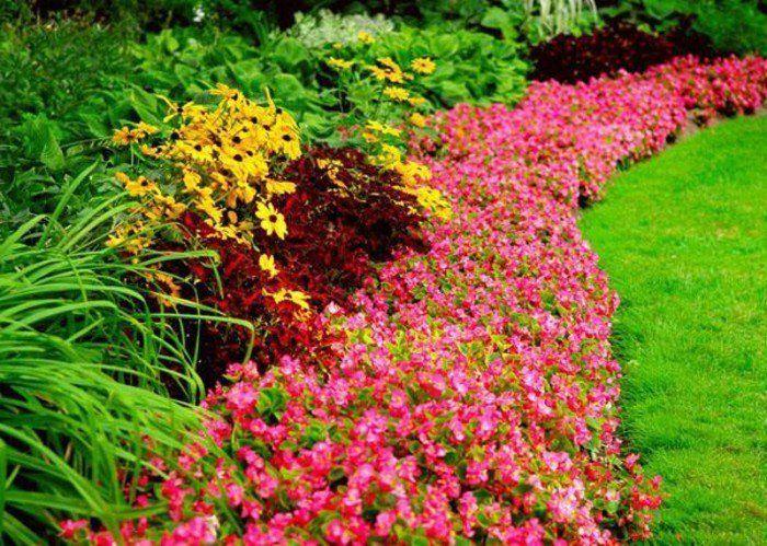 bordure parterre de fleurs fleurs rose et arbustes - Arbuste De Decoration Exterieure