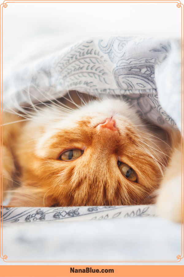 Cute Cats And Kittens August 2019 Cute Cats And Kittens