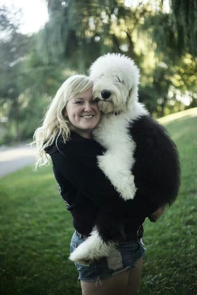 Old English Sheepdog Oes Puppy Dog Sheepdogs Old