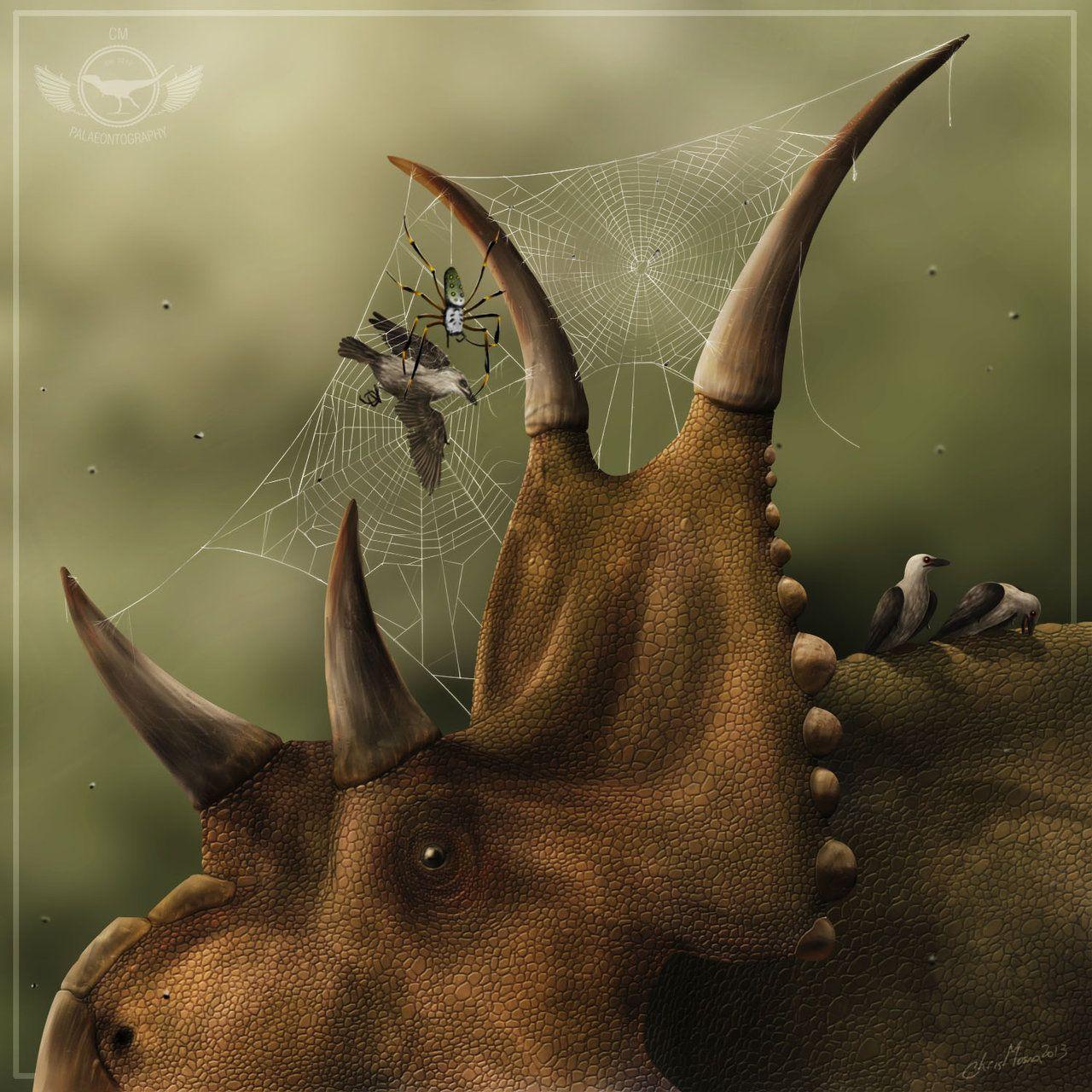 animal symbiosis - photo #34