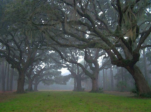 Savannah, GA in the Fog~~~incredibly beautiful!!