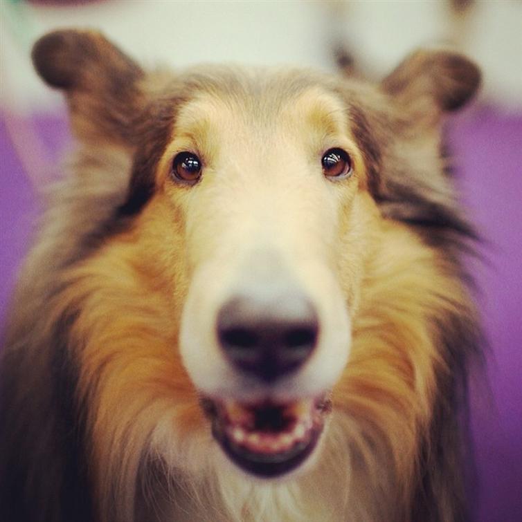 16 пород собак, которые живут дольше всех | Породы собак ...