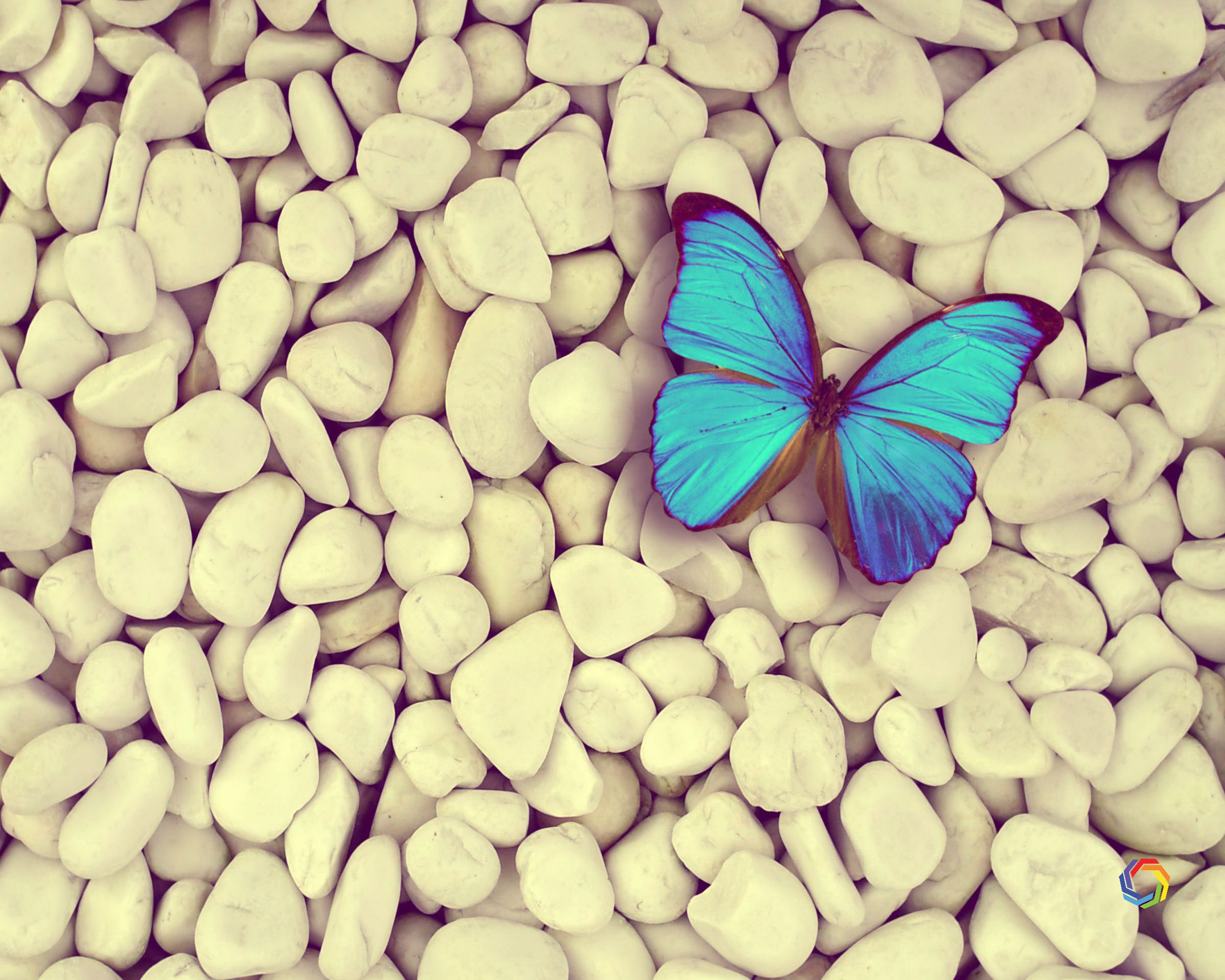 Download Desktop Blue Butterfly Free Hd Wallpaper Hd Widescreen Wallpaper Or High Definition Widescreen Wallpape Free Hd Wallpapers Blue Butterfly Hd Wallpaper