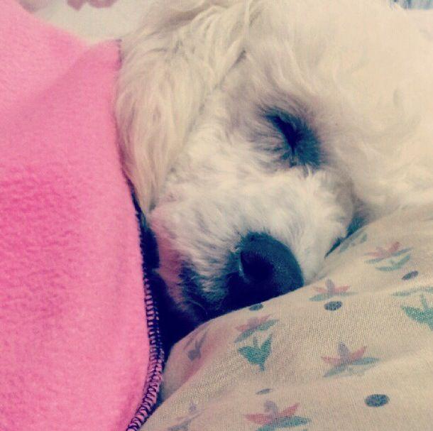 Durmiendo?ㅋㅋ