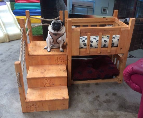 Dog Bunk Beds Best Ideas Easy Video Instructions Dogs Dog Bunk