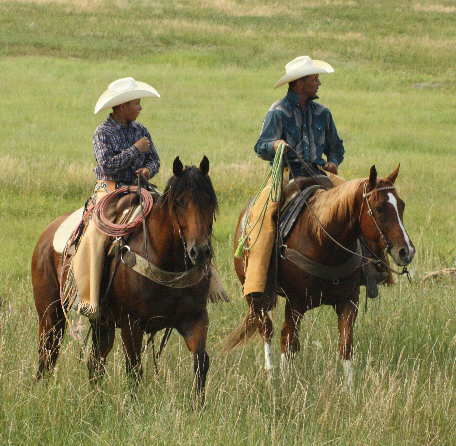 Full House Elite Performance Stock Horse Sale - June 20 - 21, 2014 in Newcastle, Wyoming
