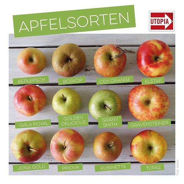 Im #Supermarkt sehen wir meist nur eine Handvoll unterschiedlicher #Apfelsorten, auch das hier ist nur eine kleine #Auswahl. --> In unserem Beitrag, der Link dazu in der Bio, stellen wir euch alte und neue Apfelsorten vor und zeigen wie und wann man sie verwendet. Schaut mal nach: Sind eure Lieblingssorten dabei?  .  .  .  .  #linkinbio #wissenswertes #natur #vielfalt #äpfel #apple #pommes #utopiade #Äpfelverwerten Im #Supermarkt sehen wir meist nur eine Handvoll unterschiedlicher #Apfelsorten #Äpfelverwerten