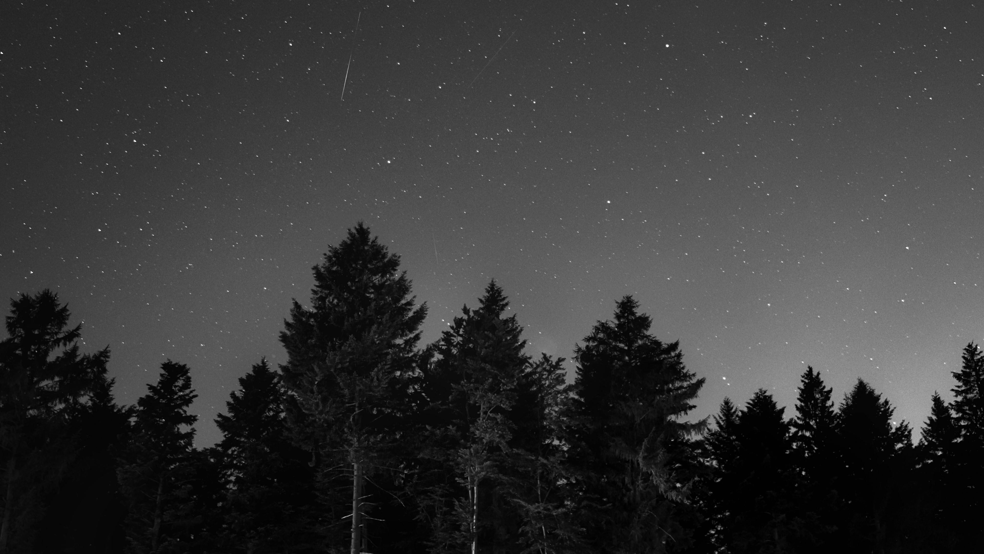 Starry Sky Night Dark Trees Black And White Monochrome Photography Starry Night Forest Photo Dark Pictures Monochrome Photography Forest Black And White