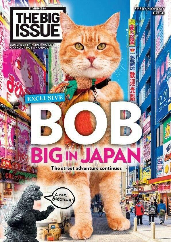 Pin by Toshiko on angeli Street cat bob, Bob, Cats