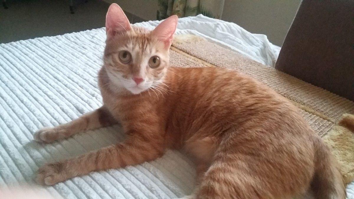 Cat For Adoption Cats Dubai Adopt My Pets Cat Adoption Pets Cats