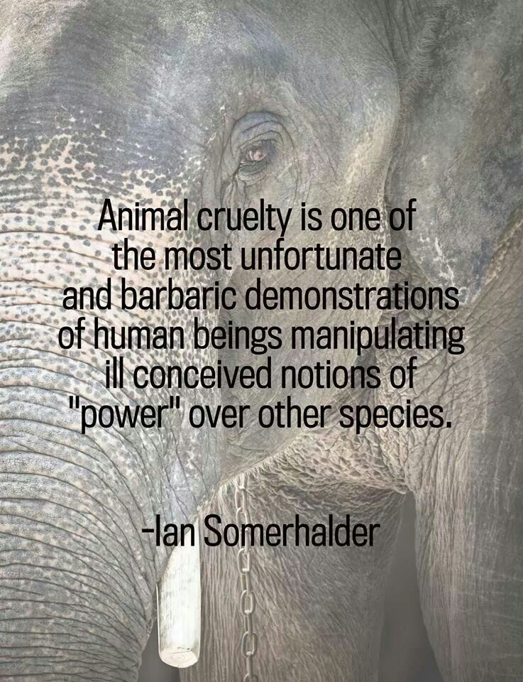 Ian somerhalder quote animal cruelty and they will stand - Animal pak motivational quotes ...