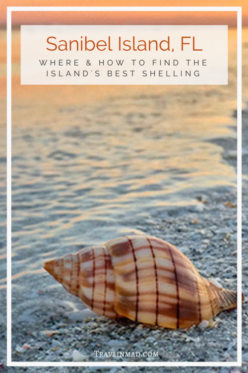 Where to Find the Best Shelling Beach on Sanibel Island, Florida is part of Where To Find The Best Shelling Beach On Sanibel Island - Sanibel Island beaches in southwest Florida are teeming with gorgeous seashells, but where can you find the best beaches on Sanibel for shelling  Here's your ultimate guide to Sanibel shelling the how, when, and where to find the best shells