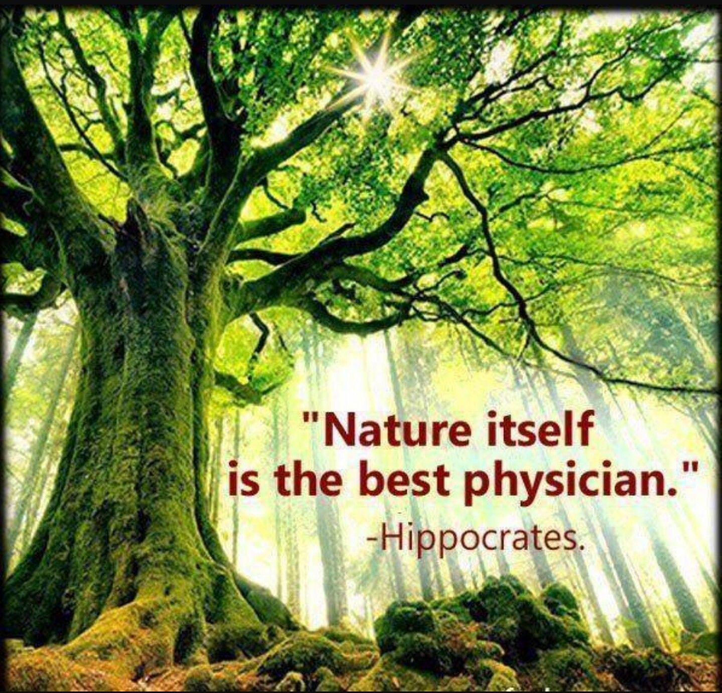 Nature itself is the best physician - Hippocrates