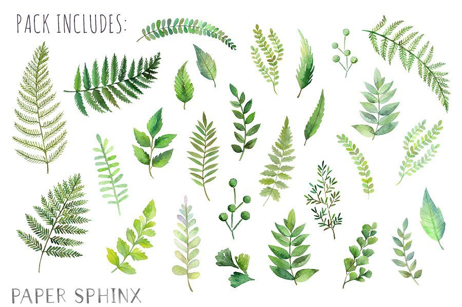 Watercolor Fern Leaf Pack Leaf Clipart Fern Tattoo Ferns