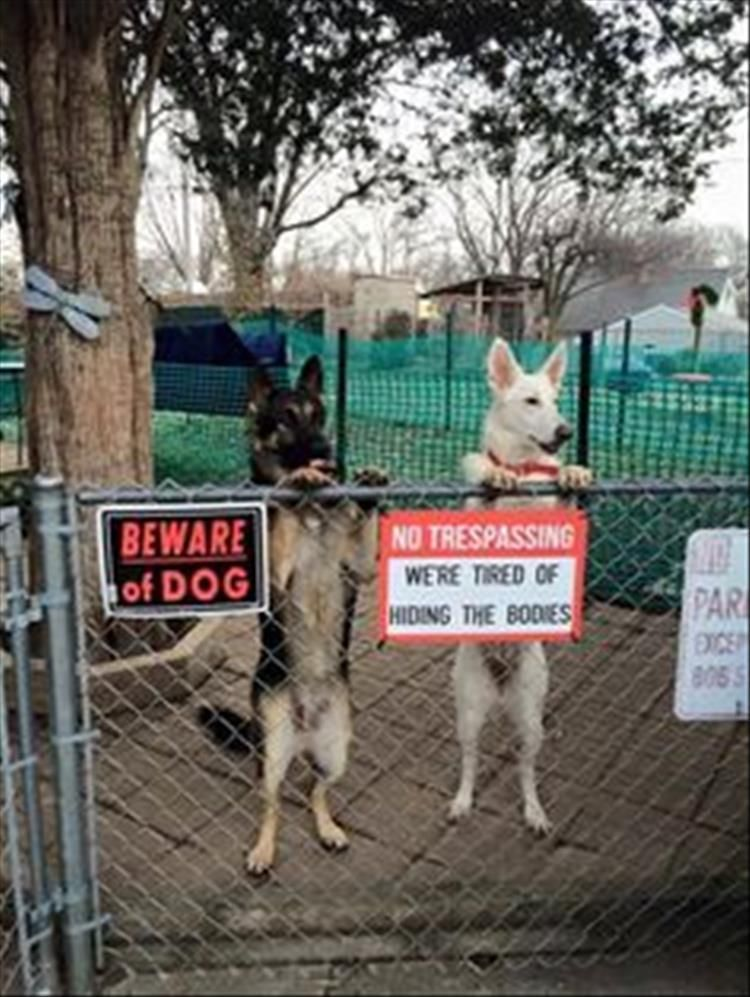 16 Beware Of Dog Signs You Can Probably Just Ignore Funny Dog Signs