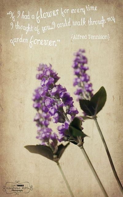 ꭿ ꮗalk ꭵn ʈhe ɠarden Lavender Quotes Flower Poem Lavender Flowers