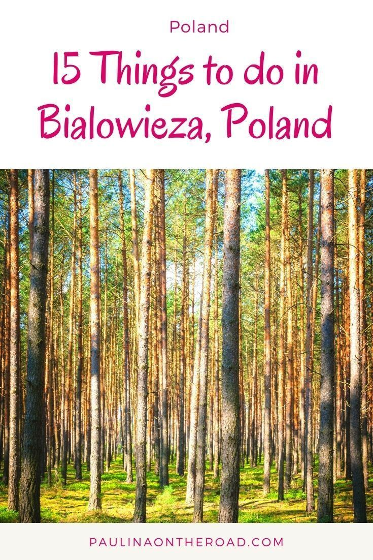 14 Best Things to do near Bialowieza Forest, Polan